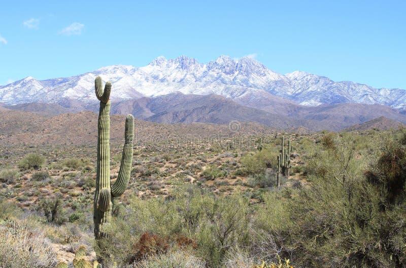 美国,亚利桑那:在四个峰顶的雪 免版税图库摄影