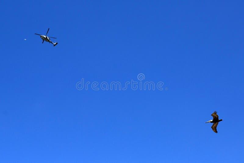 美国-加利福尼亚-圣地亚哥-皇家海滩 免版税图库摄影