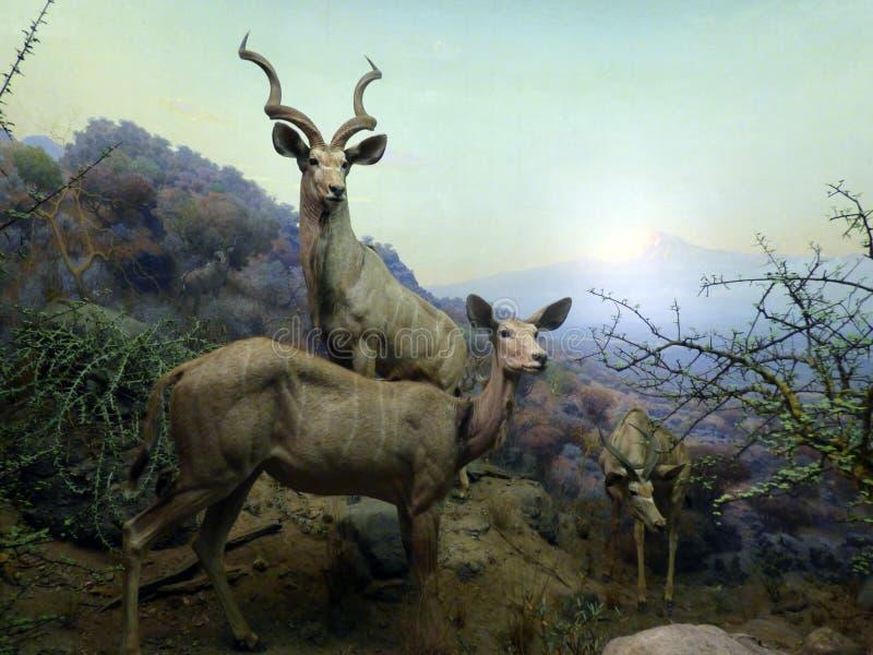 美国 纽约 自然美国历史记录的博物馆 免版税库存图片