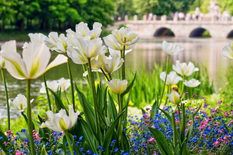 美好和五颜六色的春天在一个晴天开花在有曲拱桥梁的公园在背景中 免版税库存图片