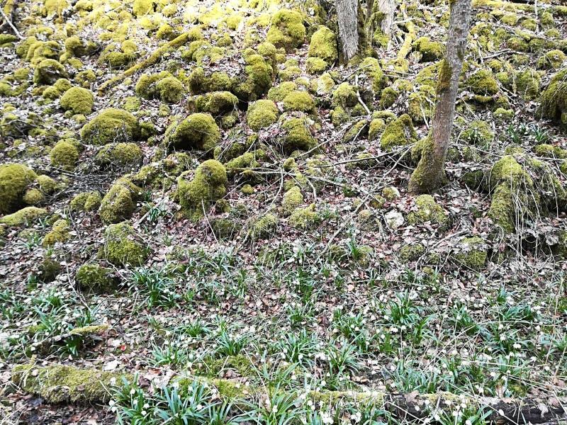 美好和精密春天在自然开花 免版税库存照片