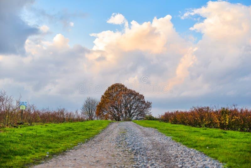 美好的乡下风景在西德,北部莱茵河Wes 图库摄影