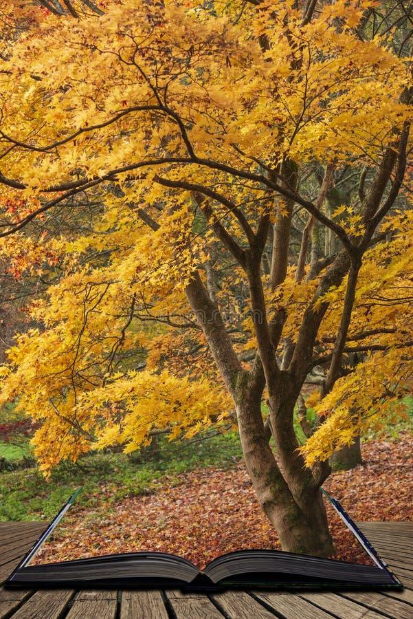美好的五颜六色的充满活力的红色和黄色鸡爪枫树在秋天秋天森林森林地风景细节用英语 免版税库存照片