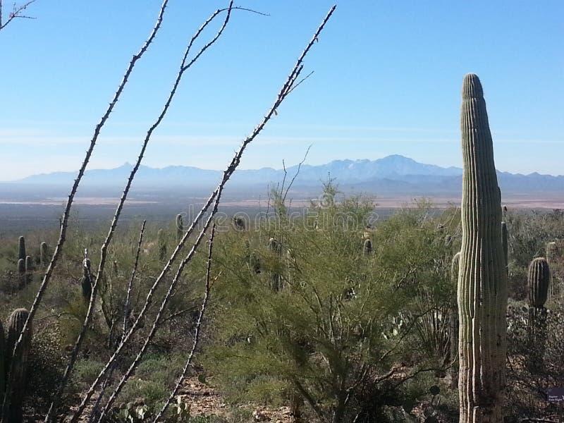 美好的亚利桑那沙漠和山风景 库存图片