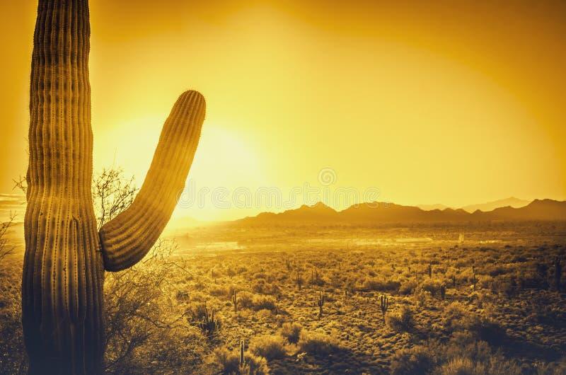 美好的亚利桑那沙漠日落 库存图片