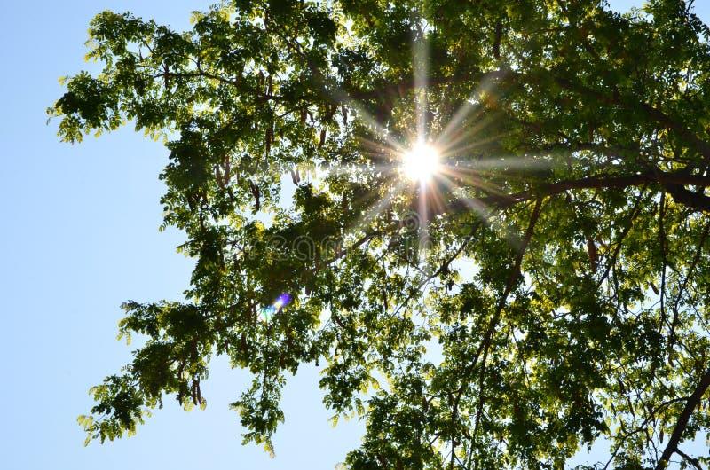 美好的光在新鲜的绿色叶子的 库存图片