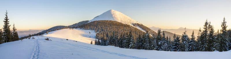 美好的全景冬天 与枞松树的风景,蓝色 免版税图库摄影
