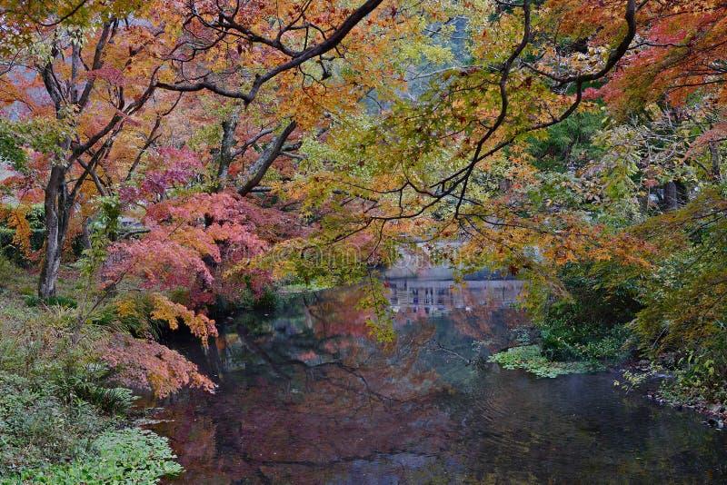 美好的全景秋天在湖Kinrin 免版税图库摄影