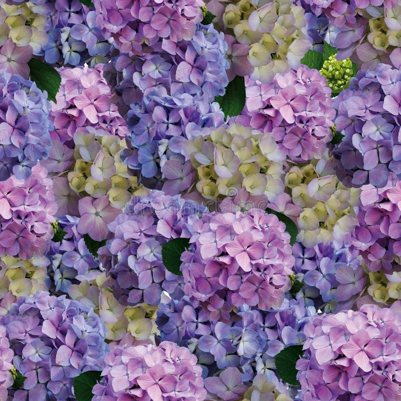 美好的八仙花属花背景 免版税库存照片