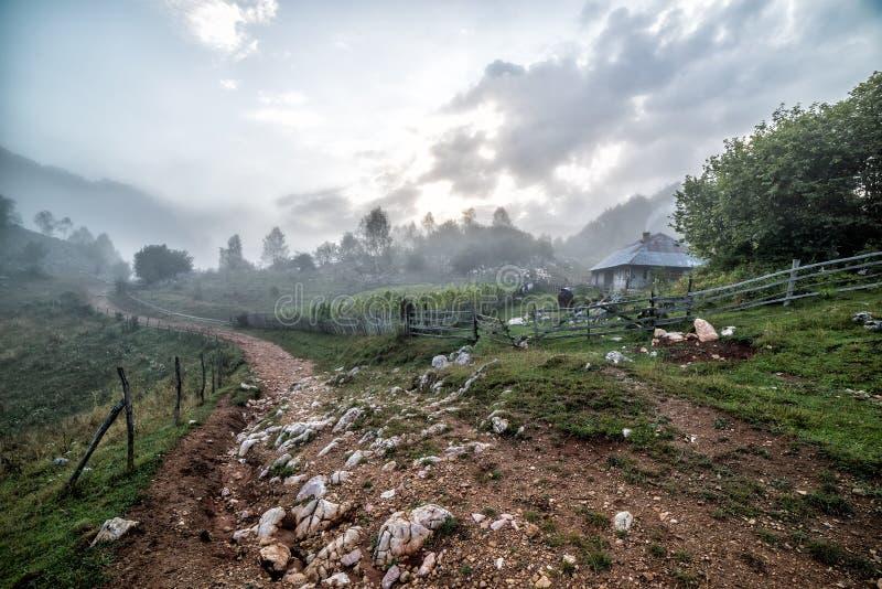 美好的农村场面在与乡下公路和篱芭的一个有雾的早晨 库存照片