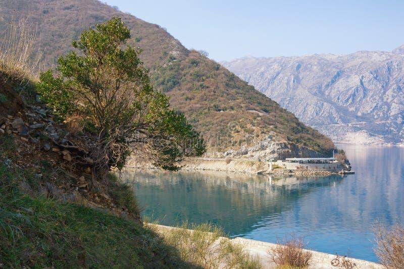 美好的冬天地中海风景 在陡峭的山坡的绿色树 黑山,科托尔湾 免版税图库摄影
