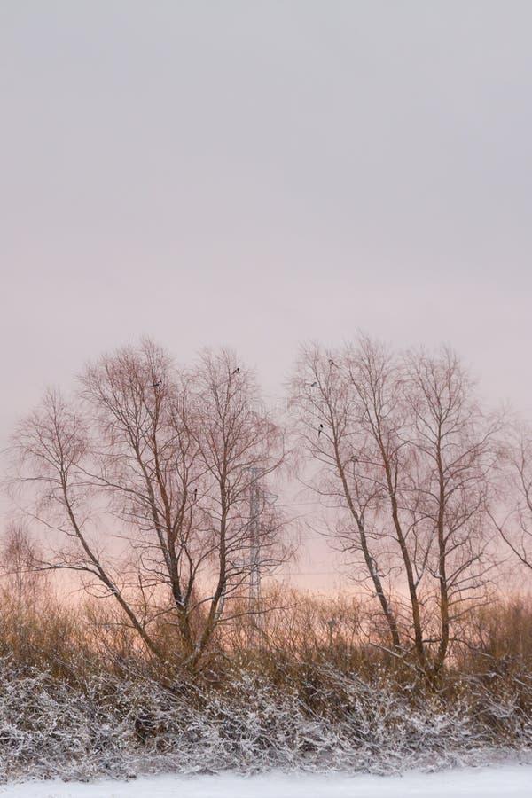 美好的冬天雪风景在日落的芬兰 库存照片