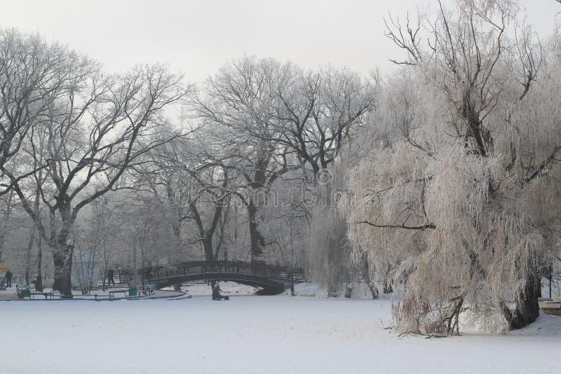 美好的冬天风景在公园 桥梁冻结的池塘 免版税库存图片