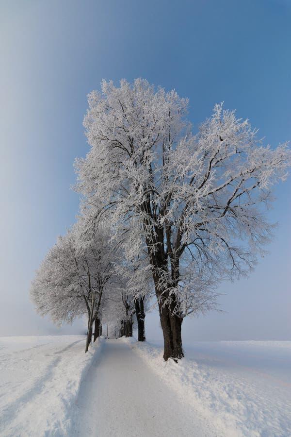 美好的冬天风景:冷淡的树在1月,奥地利 r 免版税图库摄影