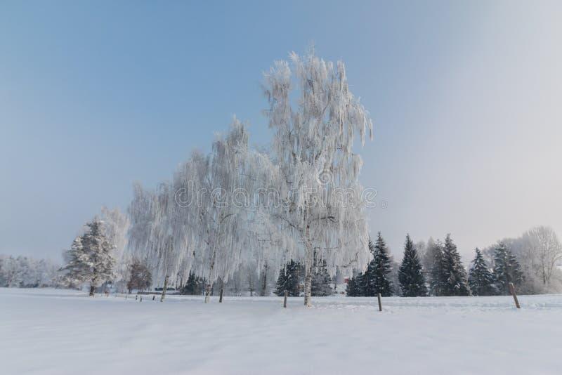 美好的冬天风景:冷淡的树在1月,奥地利 r 免版税库存图片