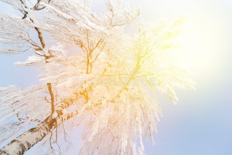 美好的冬天风景:冷淡的树在1月,奥地利 r 库存照片