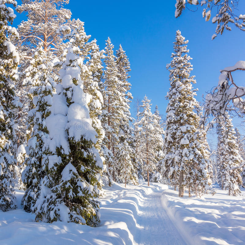 美好的冬天晴朗的天气在森林里 图库摄影