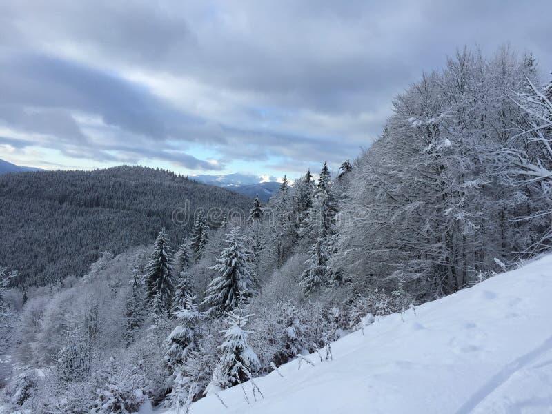 美好的冬天 免版税图库摄影