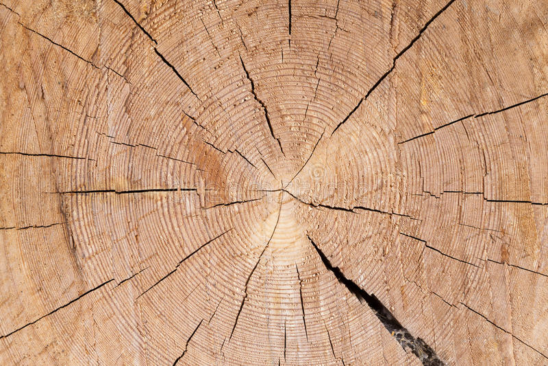 美好的切片松木,大圆环纹理 免版税库存图片
