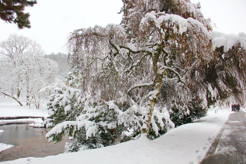 美好的剧情在英国公园在冬天 库存图片