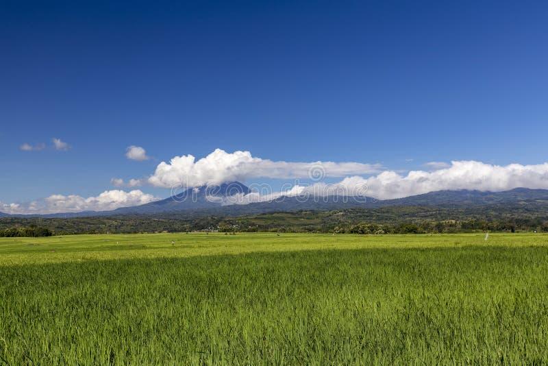 美好的印度尼西亚米领域 库存照片