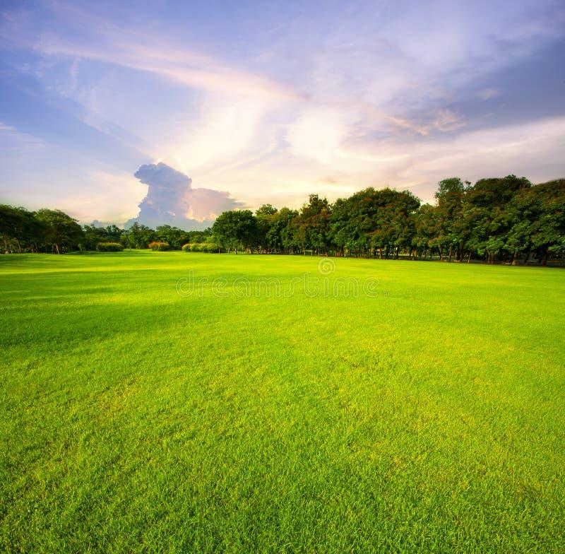美好的反对早晨天空后面的绿草领域公园 图库摄影