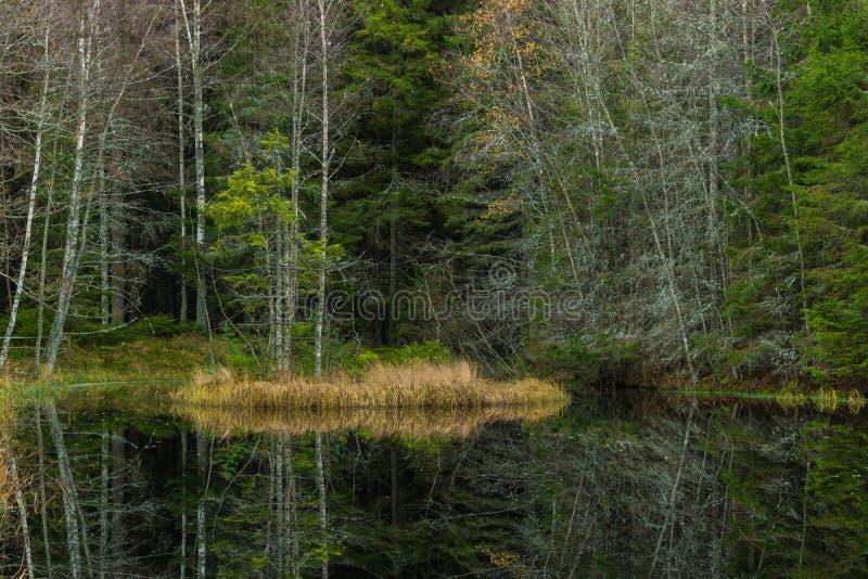 美好的反射在森林里 库存图片