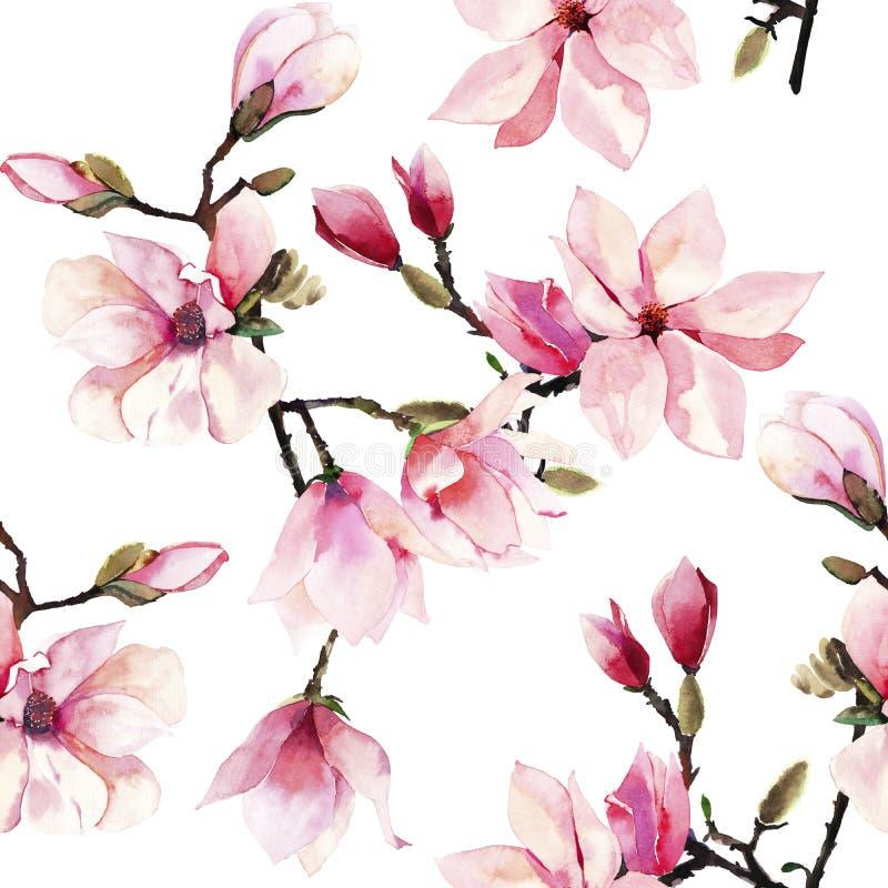 美好的可爱的一个桃红色日本木兰花水彩手例证的招标草本美妙的花卉夏天样式 免版税库存图片
