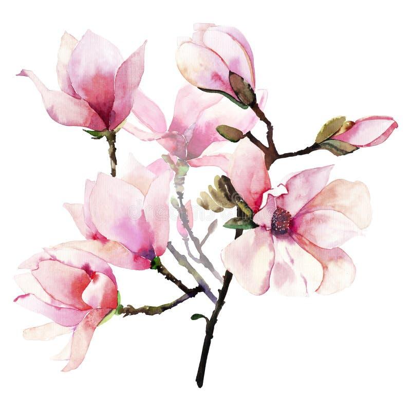美好的可爱的一个桃红色日本木兰花水彩手例证的招标草本美妙的花卉夏天花束 库存照片