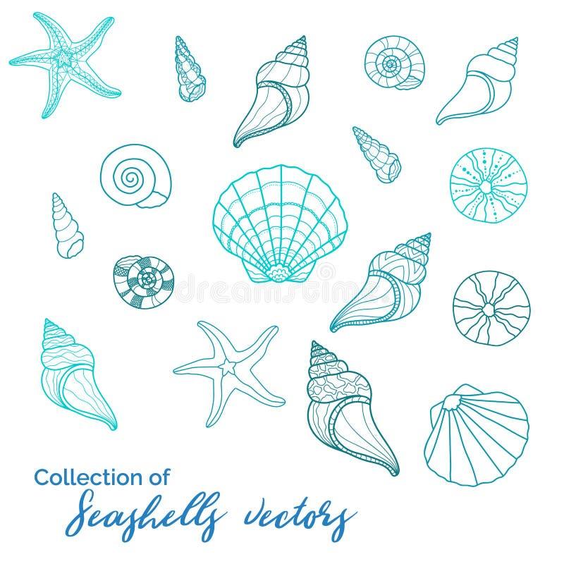 美好的各种各样的蛤蜊的sealife s,汇集,海星、蜗牛、野孩子-伟大为水中和miritim设计,时尚 向量例证