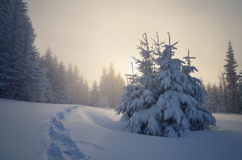 美好的圣诞节风景 免版税库存图片