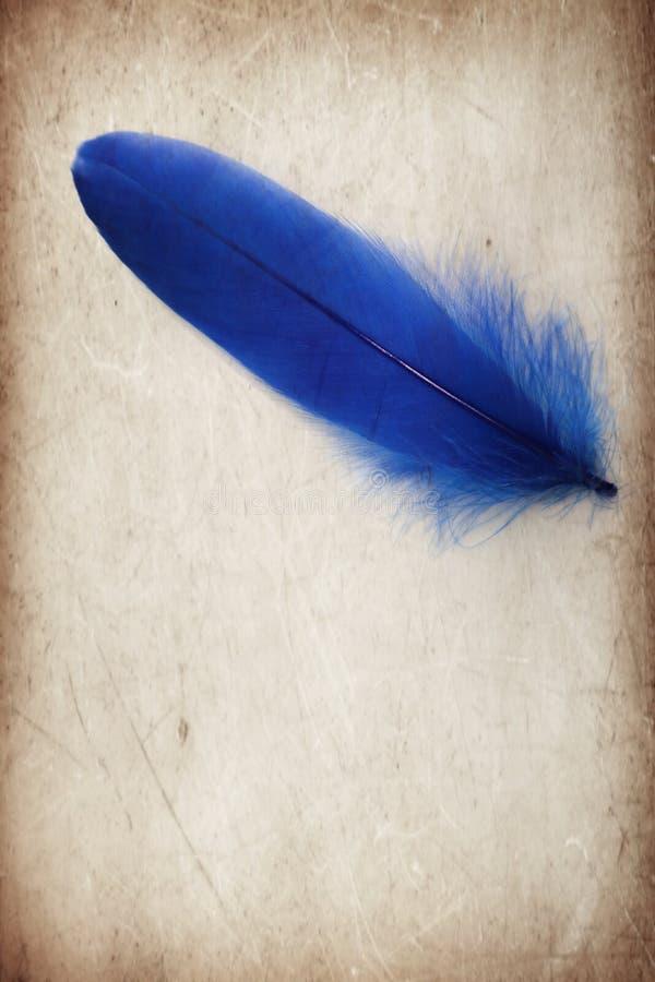 美好的在棕色和白色被隔绝的背景和墙纸的摘要颜色蓝色羽毛 库存图片