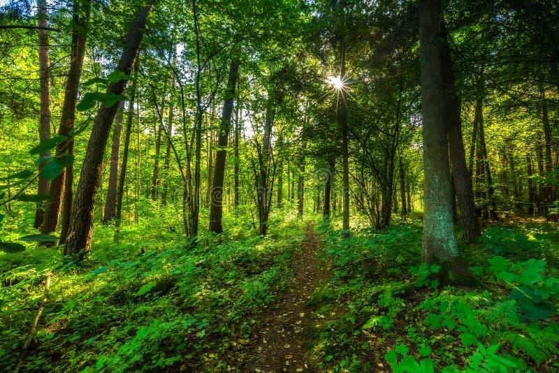 美好的夏天狂放的森林风景 免版税图库摄影