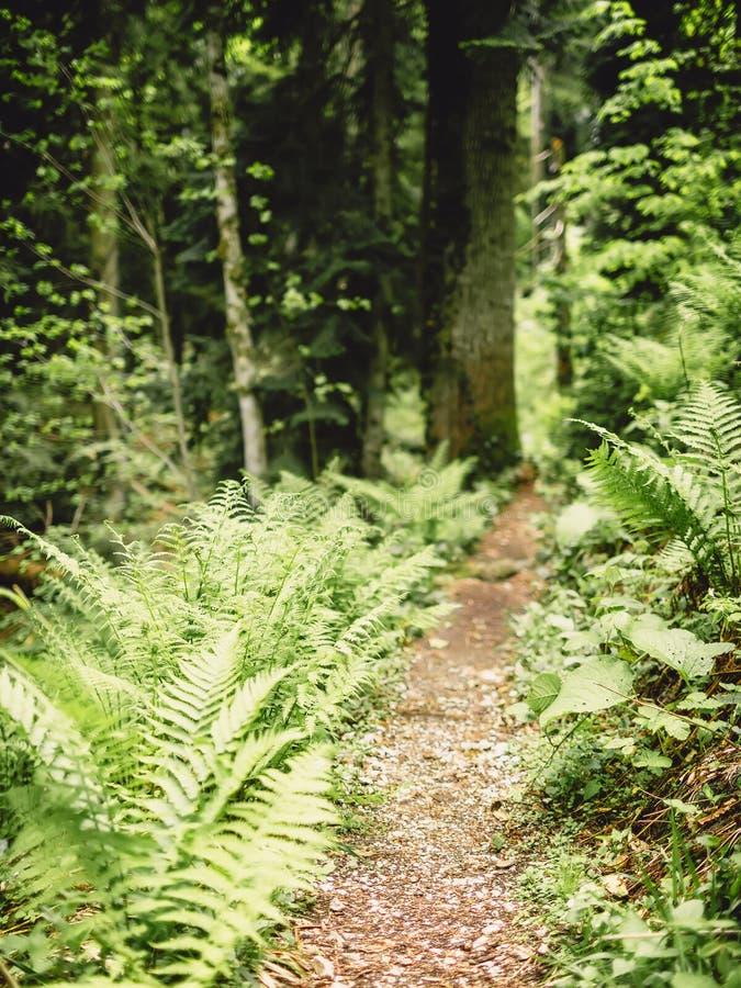 美好的夏天狂放的裤子在森林里 免版税库存照片