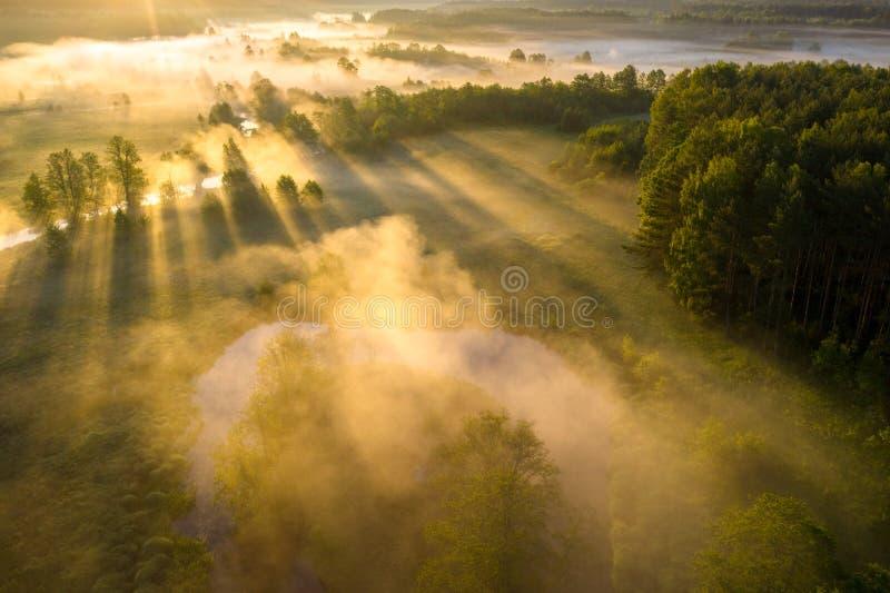 美好的夏天风景鸟瞰图 太阳通过薄雾发光在河草甸 在河沿的风景晴朗的早晨 ?? 免版税库存照片