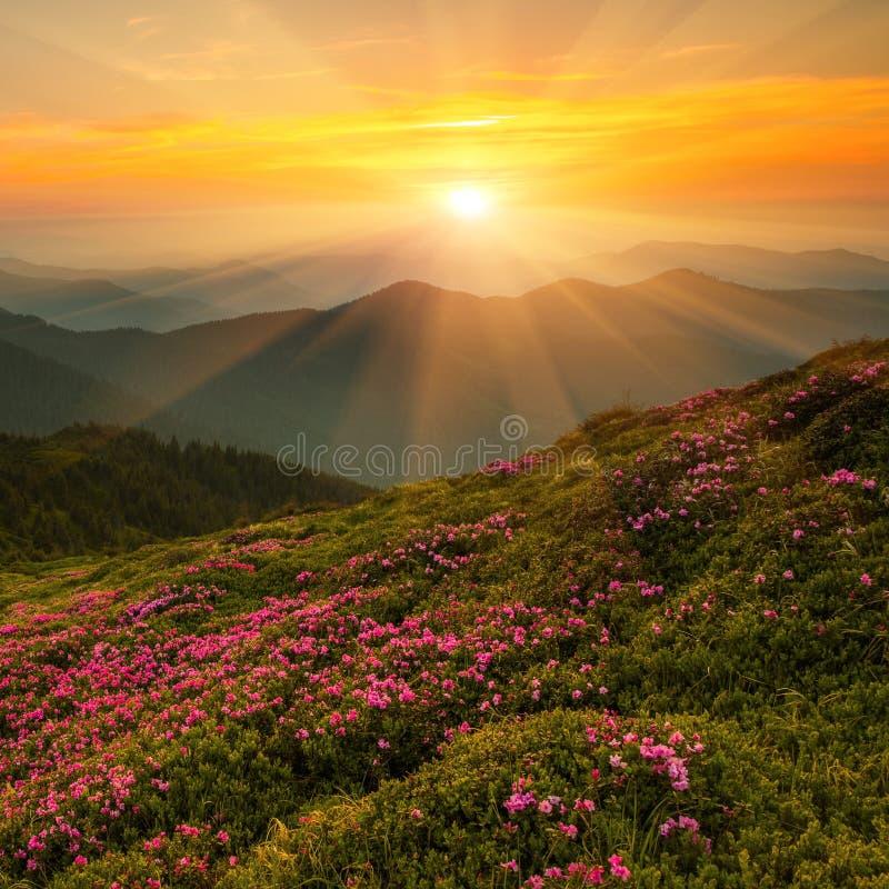 美好的夏天风景,欧洲山,欧洲旅行,秀丽世界 库存照片