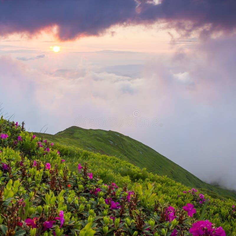 美好的夏天风景,欧洲山,欧洲旅行,秀丽世界 免版税库存图片