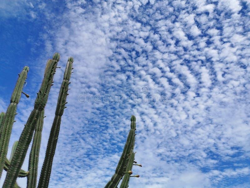 美好的天空蔚蓝背景 免版税库存照片