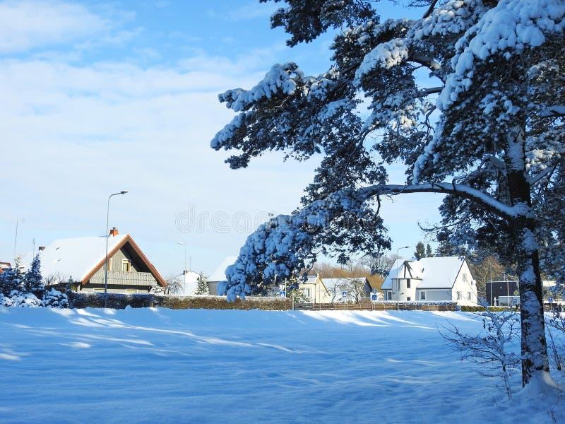 美好的家和多雪的植物在冬天,立陶宛 免版税图库摄影