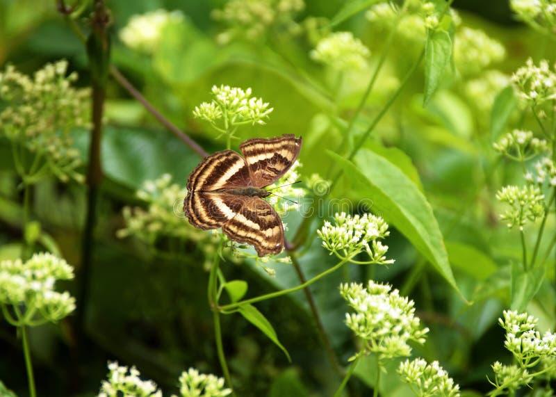 美好的平安的颜色自然蝴蝶野花夏令时 库存照片