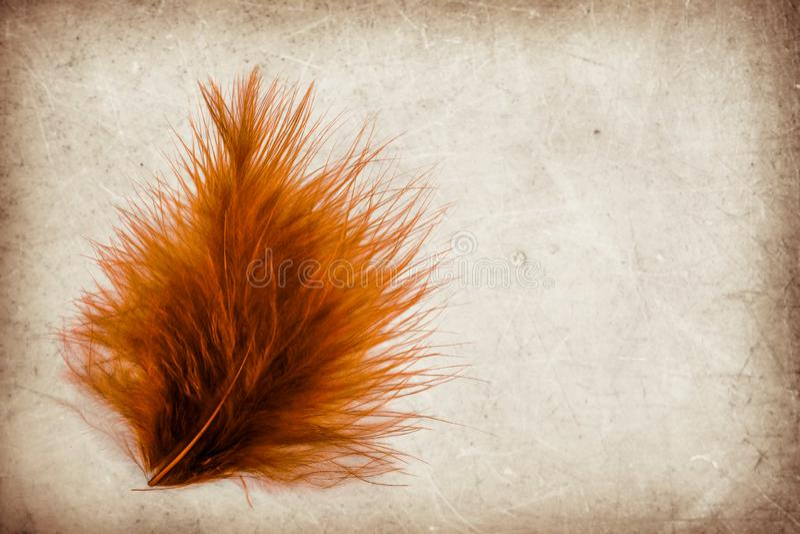 美好的抽象颜色桃红色和红色羽毛在棕色和白色被隔绝的背景和墙纸 免版税图库摄影