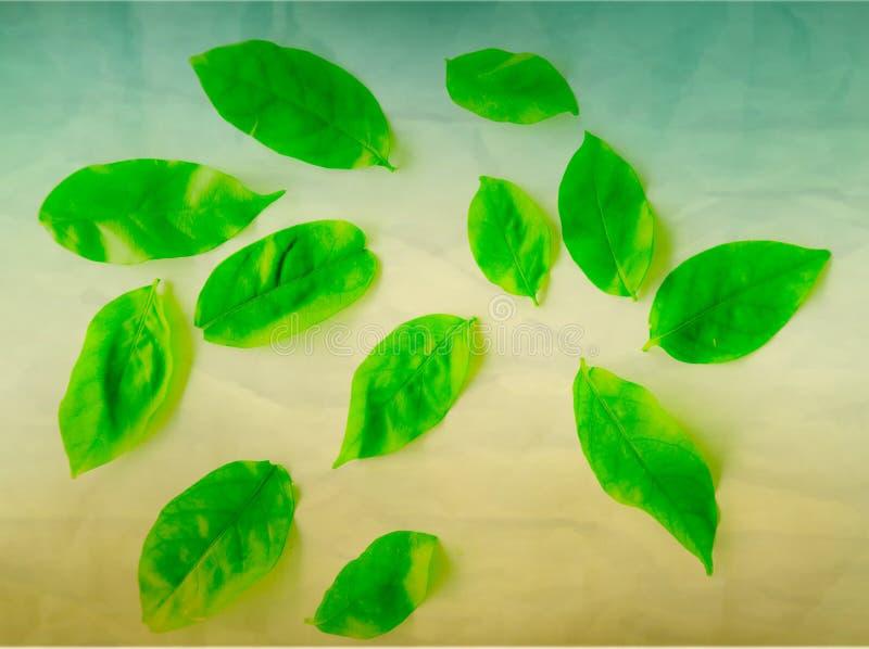 美好的摘要颜色绿色树在白色被隔绝的背景和墙纸离开 图库摄影