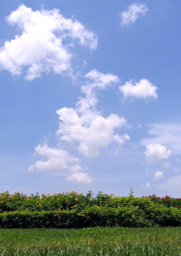 美好的日夏天 免版税库存图片