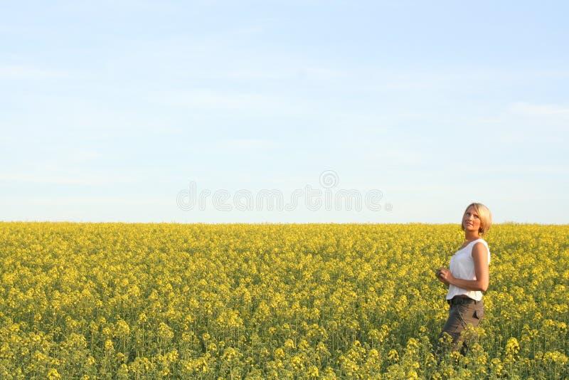美好的日夏时 免版税库存照片