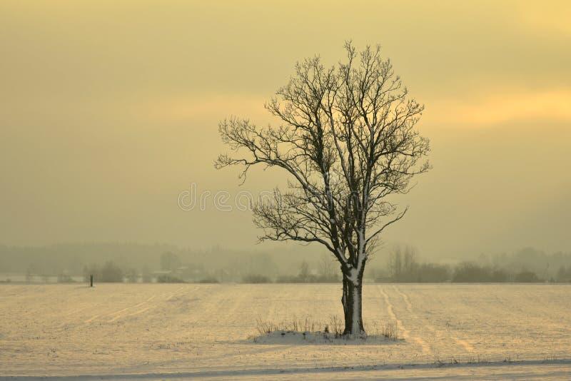 美好的日落冬天 立陶宛风景 免版税库存图片