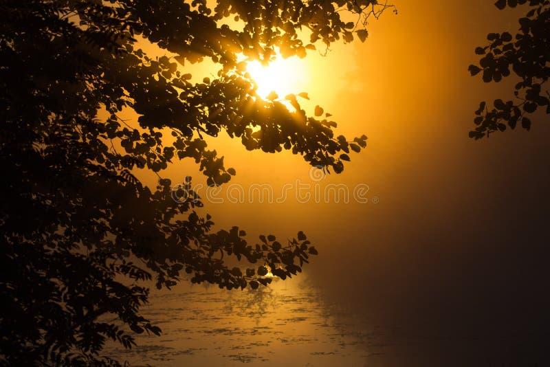 美好的日落在森林里自然迷人秀丽  免版税库存图片