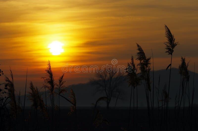Download 美好的日落 库存照片. 图片 包括有 夜间, 天空, 芦苇, 阳光, 照亮, 上色, 精采, 宁静, 晒裂 - 72356572