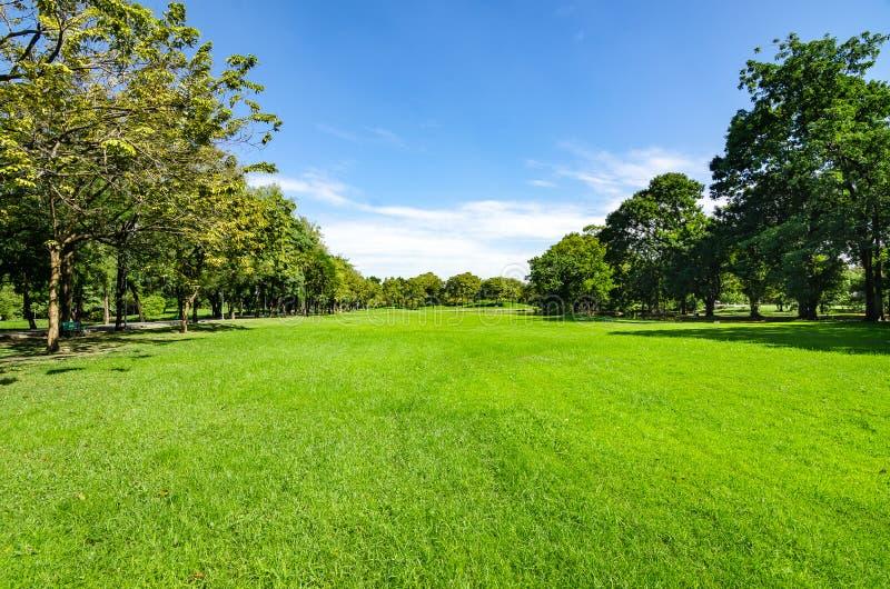 美好的早晨光在有绿草的领域的公园 免版税库存照片