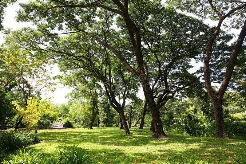 美好的早晨光在有绿草领域和绿色新鲜的公园 免版税图库摄影