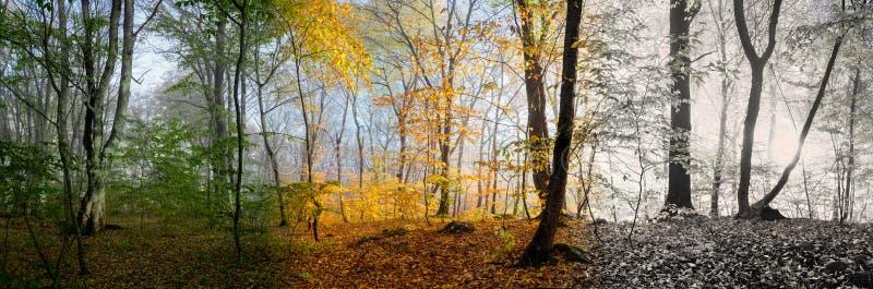 美好的早晨场面在森林里, 3个季节的变动 免版税库存图片